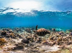 """""""Conservation: The seas cannot be saved on a budget of breadcrumbs - The marine…"""