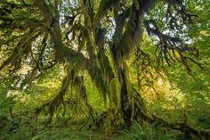 Tree photo by Jordyn Murdock