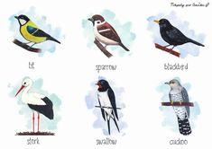 Ptáci v angličtině a slovenštině Common Birds, School Clubs, Book Activities, English, Winter, Cards, Animals, Teaching, Winter Time