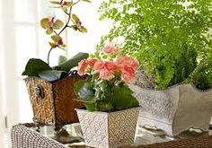 Image result for flowers indoors