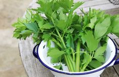 herbal pharmacy shepherd's purse herb celery herb Contact blackthorn herb blackberry herb cilantro herb plantain herb dill herb thyme herb parsley herb horse chestnut herb herb lovage New page As a me. Natural Treatments, Natural Remedies, Plantain Herb, Cilantro Herb, Home Remedies For Herpes, Soup Recipes, Healthy Recipes, Home, Plants