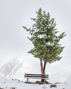 Have a break by Johann Trojer / 500px Austria, Dandelion, Snow, Explore, Flowers, Plants, Outdoor, Outdoors, Dandelions
