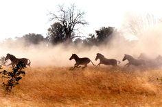Lubombo Conservancy | Swaziland Tourism | Swaziland Safari | Swaziland Attractions