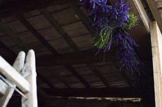 Levendula virágzás és szüret 2015 Plants, Plant, Planets