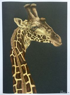 Intricate Art by Tim Jeffs.  I used Marco Raffine Pencils #intricateart…