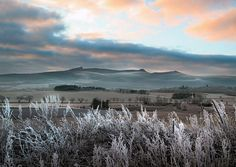Cold, misty evening over the slopes of Bennachie, Aberdeenshire.
