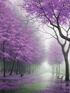 Paarse bomen in een lichte mist