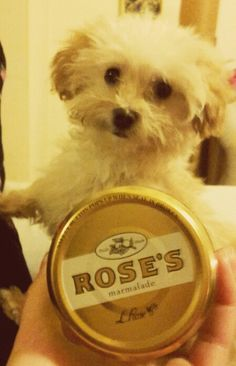 Rose's marmalade