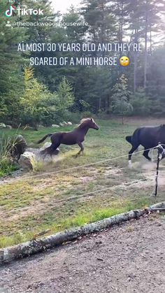 Funny Horse Videos, Funny Horse Pictures, Funny Horses, Cute Horses, Pretty Horses, Horse Love, Funny Animal Videos, Beautiful Horses, Animals Beautiful