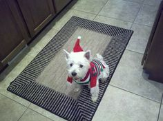 Cute puppy christmas outfit