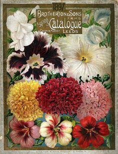 Vintage Ephemera: Brotherton & Sons Spring Catalog, 1897