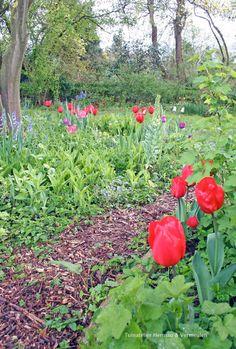 Een beplantingsplan van Tuinatelier Herman & Vermeulen http://tuinatelierhermanvermeulen.blogspot.nl/2016/04/lenteborder.html