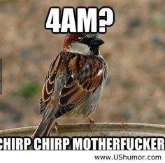 """Bahaha """"chirp chirp motherfucker"""""""
