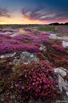 Ile de Groix, Bretagne, France Merveilleuses balades sur cette île sauvage...