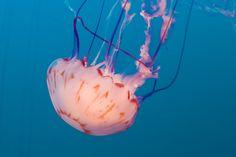 Jelly by Rajesh Gathwala on 500px