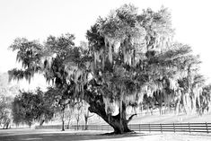 DESTREHAN PLANTATION BLACK AND WHITE Framing Photography, Photography Gallery, White Photography, Fine Art Photography, Canvas Pictures, Pictures Images, Print Pictures, Canvas Art Prints, Wall Prints