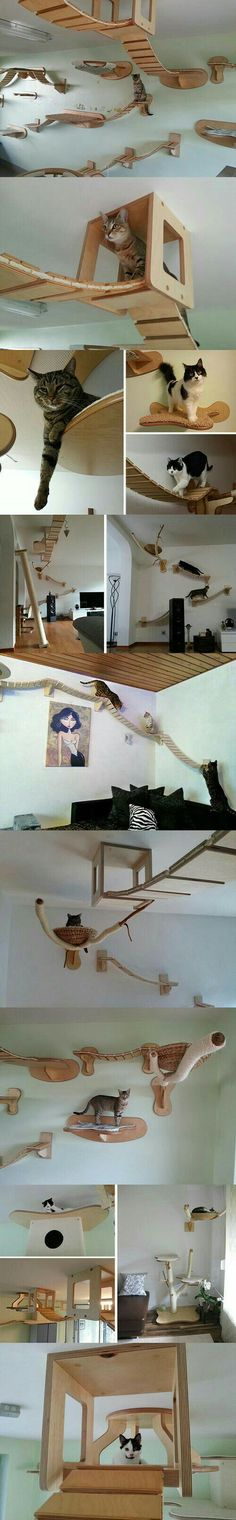 Cat friendly house designs