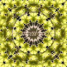 Mandala Kaleidoskop ''Blatt''  Kreatives by Petra #mandala 'kaleidoskop #spiegelung #reflektion #reflection #innereruhe #inspiration #blatt #blätter #leaf #leafs #grün #green #blumen #flowers #blüten #blossom #frühling #spring #sommer #summer #home #deko #dekoration #plakat #poster #leinwand #canvas Petra, Inspiration, Mandalas, Home Decoration, Mosaics, Poster, Summer, Flowers, Biblical Inspiration