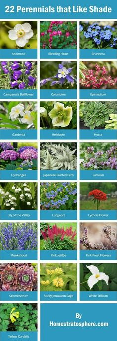 Shade loving perennials for your garden.