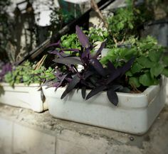Kitchen butler sinks are used as planters at a home entrance and filled with plants