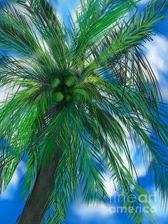 Title:  Palm Sky  Artist:  Christine Fournier