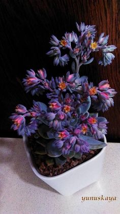 Some kind of succulent plant. But gorgeous!