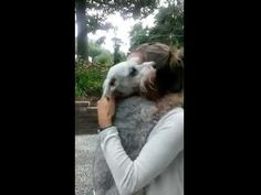 Dog Is So Excited She Nearly Passes Out After Seeing Family Member Gone for 2 Years! – iHeartDogs.com