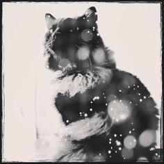 Monochrome Kuromame   #cameranapp #cameran   #catlover #chat   #catsofinstagram #katsofinstagram  #neko #kitten #kitty   #photocat #petweet