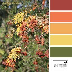 #Farbpalette, Farbinspiration #Herbst, warme Herbstfarben, Farben im Herbt // © wildpeppermint-design.de