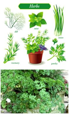 35 plants to grow in containers