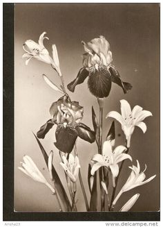 5k. Germany, Flora Flower bouquet real photo IRIS - Erhard Neubert