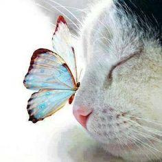 Poes met vlinder op de neus.