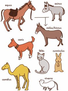 what does equus mean in latin