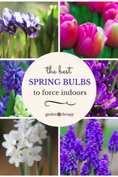 The best bulbs to force to bloom indoors plus container ideas - I like to use a shallow dish with soil or a mason jar with pebbles, but there are plenty more ideas here. #spon #ebay