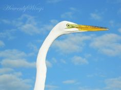 Beautiful 8x10 Egret Photography Lovely Blue by HeavenlyWings, $25.00