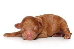 gravidanza cane durata sintomi