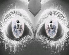 øjne 2