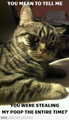 Suspicious cat #caturday