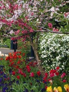 spring-walk-macquarie-wall-royal-botanic-gardens-