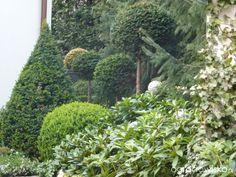 Galeria zdjęć - Własne topiary w ogrodzie - Ogrodowisko