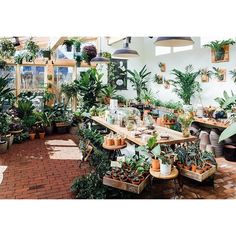 pistils nursery - Great news, everyone: We've opened the doors to our Solarium! There's still work to be done (just wait until you see the custom shelving and sliding glass barn doors) but we'd love for you to come visit the space and tell us what you think. Stay tuned for some fun, celebratory giveaways later this week, and for details about a grand opening shindig! 2016 #PistilsNursery