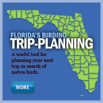 Great Florida Birding Trail - links to all of the sites on the trail, how to plan a birding trip, species ID links, and more! A must for budding or master birders who want to enjoy the state.