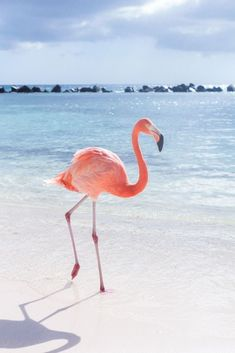 sandy beaches, pink flamingos, color