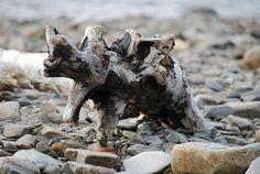 Polttopuu, Russelvin rannalla