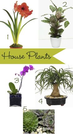 How to Buy House Plants- virtually indestructible plants for your home