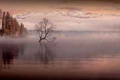 This wasn't a long exposure, but just a straight shot of what was before me, on a very very cold morning in Wanaka in front of that tree. Sunrise Colors, Early Morning, Fujifilm, New Zealand, Clouds, River, Long Exposure, Outdoor, Outdoors