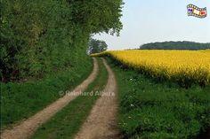 Fotos Landschaft SH - FoReAl .de Bilder - Themen Rapsblüte ...