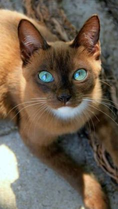 Beautiful eyed cat
