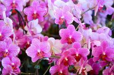 Τα 5 μυστικά για καλή ανθοφορία των φυτών μας Home And Garden, Nature, Flowers, Plants, Gardening, Decoration, House, Decor, Naturaleza