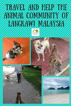 Visit a project that is dedicated to supporting the cats and dogs that call Langkawi home.